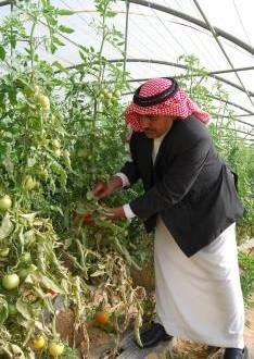 نبذة عن الزارعة بالأردن