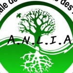 aneliaa-509x330