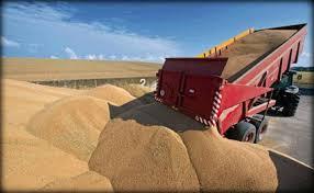 واردات الجزائر من القمح تواصل ارتفاعها خلال التسعة أشهر الأولى من 2013