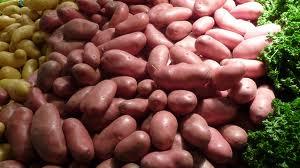 ملف شامل ومهم حول تقنيات زراعة البطاطس ( فرنسي )