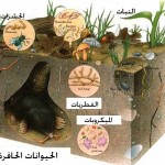 soil-life11