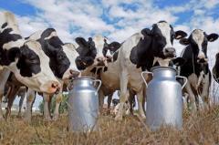 الجزائر تدعم الحليب بأزيد من مليار دولار