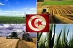 خسائر الفلاحة التونسية ترتفع إلى 25 مليون دولار في 8 أشهر