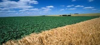 تقرير أممي يُحذر المغرب من نقص مستقبلي في محاصيل الزراعة