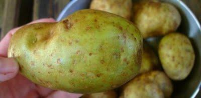 """احذروا من البطاطس الخضراء فهي غنية بمادة  """"السولانين """" القاتلة"""
