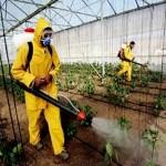 المبيدات الكيماوية في الانتاج الفلاحي و ارتباطها بصحة المستهلك