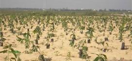 الجفاف يتحدى خطط الاقتصاد بالمغرب وتونس والجزائر