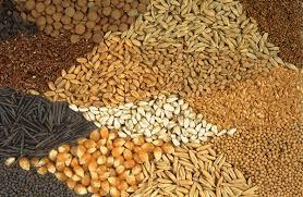 المغرب يتوفر على قانون متقدم ينظم قطاع البذور والنباتات (مسؤول)