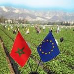 مخطط المغرب الأخضر : دعم بقيمة 60 مليون أورو من طرف الاتحاد الأوروبي