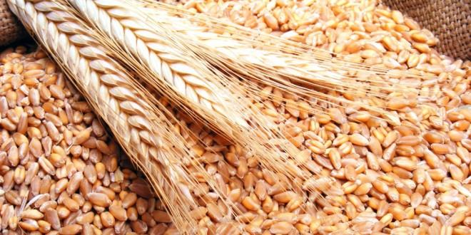 مصر توقف استيراد القمح حتى مارس 2015