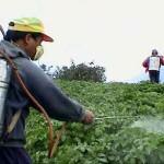 مبيدات الآفات