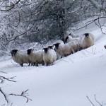 وزارة الفلاحة تطلق برنامجا استعجاليا لحماية قطاع الماشية في المناطق المتضررة بتساقطات الثلوج