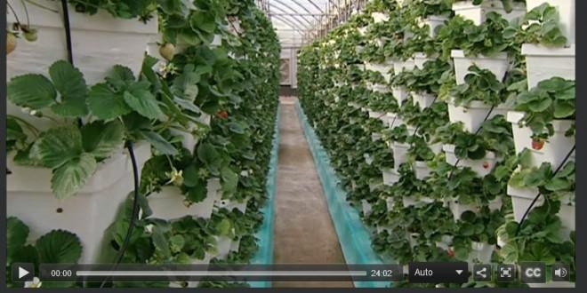 الزراعة العضوية في قطر الواقع والتحديات