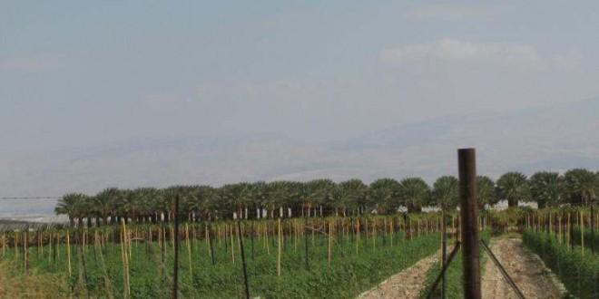 ووتش: انتهاكات لحقوق الأطفال الفلسطينيين بمزارع المستوطنات
