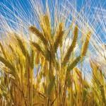 دراسة حديثة تكشف أسرار تنفس النبات