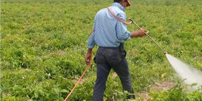 فضيحة : شحنات كبيرة من المبيدات المسرطنة تدخل المغرب سرا