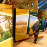 النخيـــــــل … دعامة الواحات للتأقلم مع التغيرات المناخية