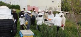 الغرفة الفلاحية لجهة الدارالبيضاء سطات تبرمجة دورات تكوينية لفائدة مربي النحل