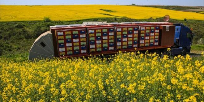"""خلية نحل """"جوالة"""".. ابتكار تركي لإنتاج العسل الطبيعي"""