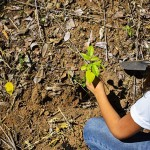 EL SALVADOR-ENVIRONMENT-REFORESTATION-CAMPAIGN