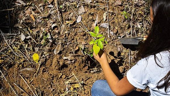 """دمنات: ورشة انطلاق مشروع """"الاستثمار في الطبيعة : نموذج جديد للمهن الخضراء"""" يوم 25 يناير"""