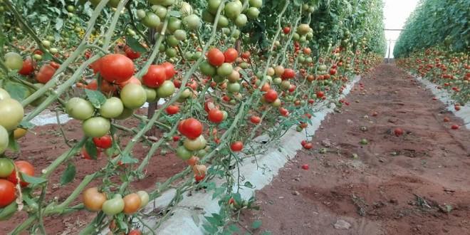 المغرب أول مصدر عالمي لإسبانيا بالخضر والفواكه