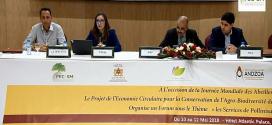 أكادير تحتضن المنتدى الدولي لخدمات التلقيح بالنحل