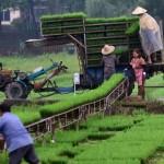 منظمة الأغذية والزراعة للأمم المتحدة (فاو) : للشهر الخامس على التوالي.. ارتفاع أسعار الغذاء العالمية