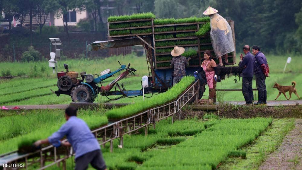 زاد مؤشر فاو لأسعار الحبوب 1.4 في المئة.
