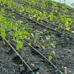 ندوة علمية: استغلال المياه الجوفية وتحديات استدامة الفلاحة المسقية  بقطب الجودة الغذائية مكناس