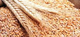 الحكومة المغربية تقرر إلغاء الرسوم الجمركية على القمح الروسي
