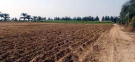 بوتفليقة يمنح مليون هكتار من الأراضي الفلاحية للشباب في 2015