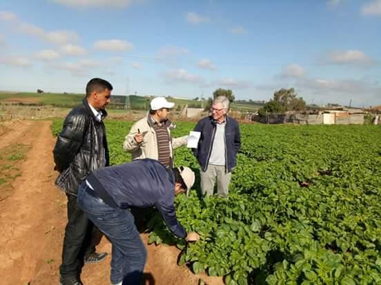 جهة الدار البيضاء – سطات: زيارات ميدانية لخبير هولندي مختص في زراعة البطاطس