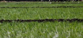 المبيدات الزراعية المسرطنة تفتك بالمصريين