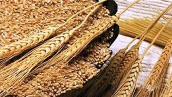 منظمة مصرية  تطالب مصر بوقف استيراد القمح من روسيا بعد كارثة الانفجار النووى
